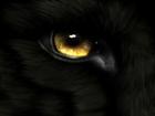 Stuckman's avatar
