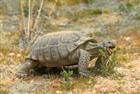 tortois3's avatar
