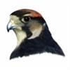 FalconNL's avatar