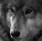 wolfeter's avatar