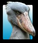 Shoebill's avatar