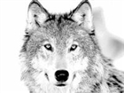 Worldspiritwolfy's avatar