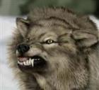 wolfstreak's avatar