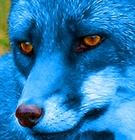 IndigoFox's avatar
