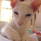 dilleh's avatar
