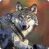 telekrus's avatar