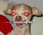Puppytime's avatar
