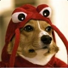 JoshuaXedos's avatar