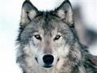 xKylePlox's avatar