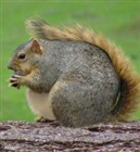 Fatsquirrel's avatar
