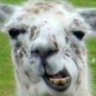 Llamasquishy's avatar