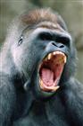 KaOs_Guerilla's avatar