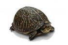 Parkour282's avatar