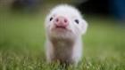 Pighead123's avatar