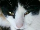 jlayton31548's avatar