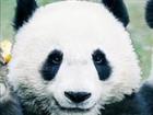 yacheggs's avatar