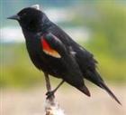 birdy7788's avatar
