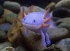 mudkipsoffury's avatar