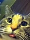 boomstickboy's avatar