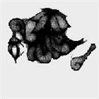 Nerotic's avatar