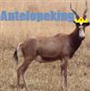 antelopeking's avatar