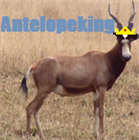 antelopeking's avatar