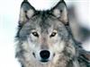 Azurewhitewolf's avatar