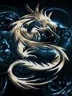 dragxoz's avatar