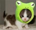 kittyfrog4eva's avatar