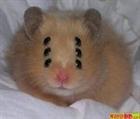 Evil_Hamster's avatar