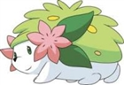 shaymin_rocks's avatar