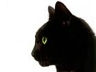 BlockKitty's avatar