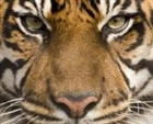 Snapnshots's avatar