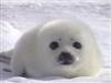 Sealystar's avatar