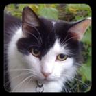 seekercat's avatar