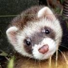 GarretFuller's avatar