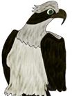 BalkanNinja's avatar