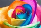 Rainbowbuds's avatar