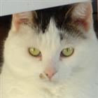 Galenmacil's avatar
