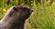 Afonso47's avatar
