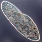 paramecium13's avatar
