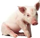 PigsRULEZ567's avatar