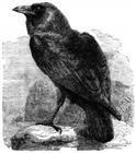 ravenv12's avatar