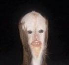 Obscuratus's avatar