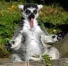 Livid_Lemur's avatar