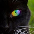 LadyAshlee's avatar