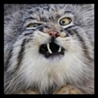 Rhaz's avatar