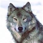 Erpook's avatar