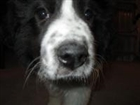 snowpup284's avatar