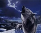 agentwolf44's avatar